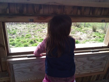 Peeping out of the bird hide